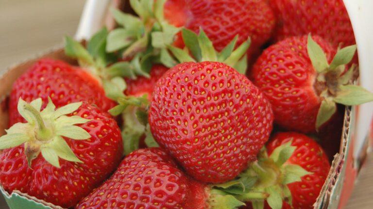 BLZ strawberries 768x432