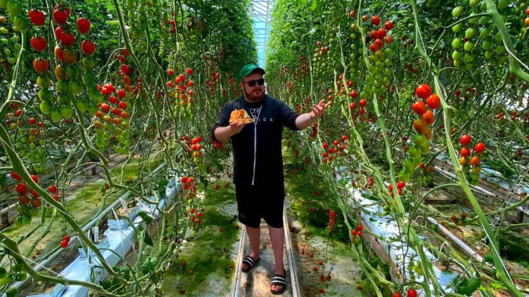 ELP tomatoes 768x432