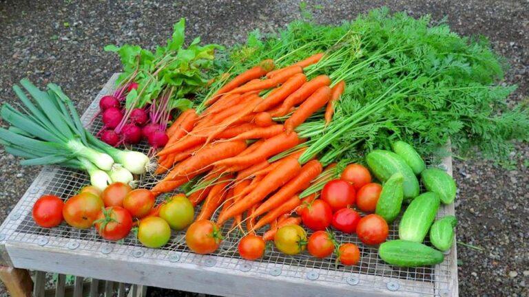 KFM veggie table 768x432