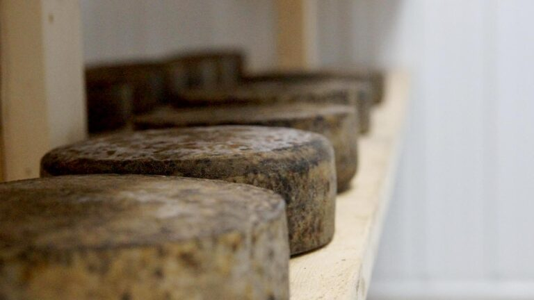 WKBT cheeses 1 768x432