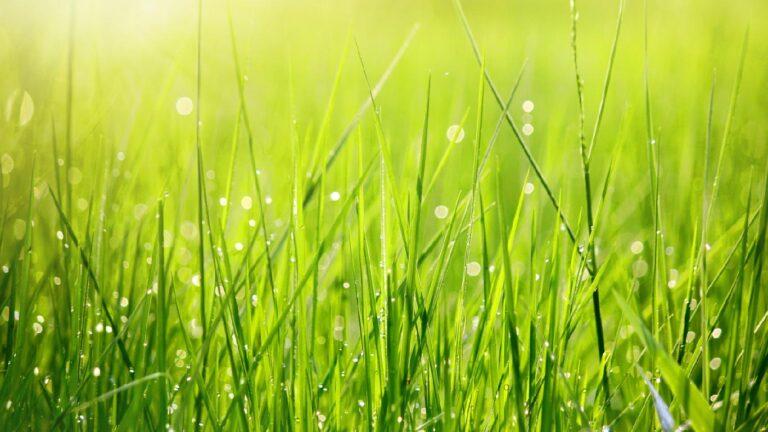 grasses bg 16x9 01 768x432